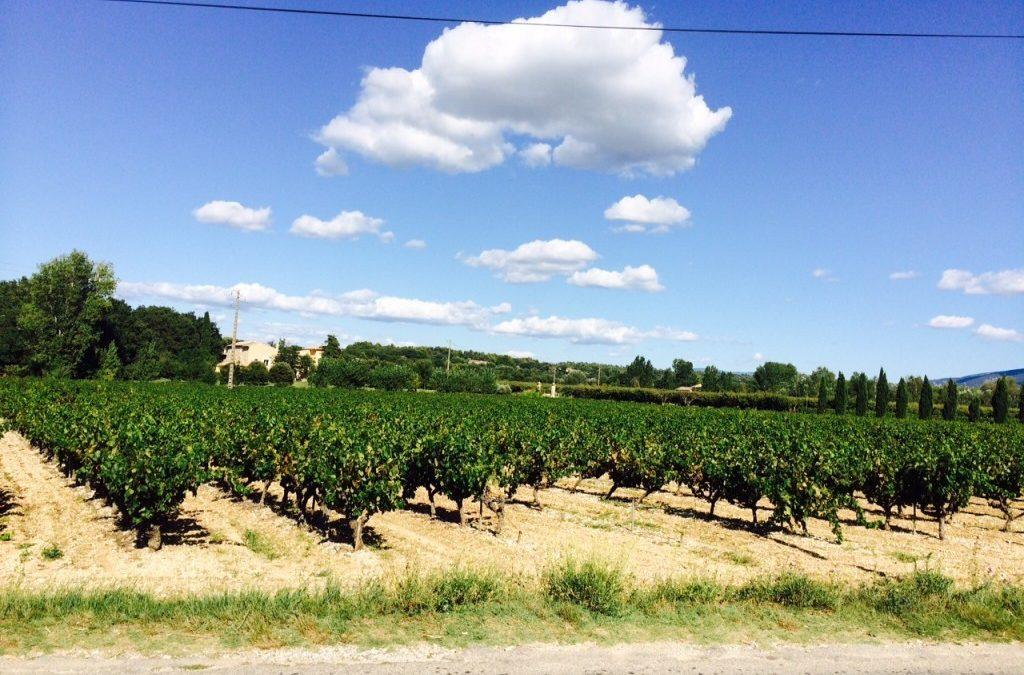 Vines Update